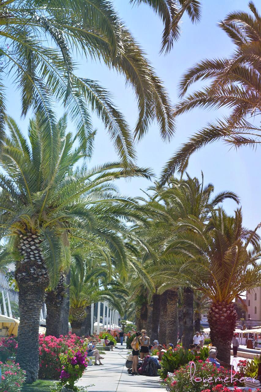 riva palme cvijeće